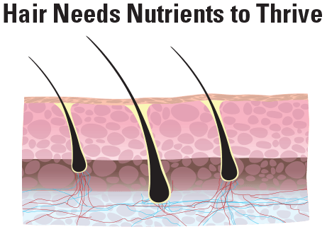 Cross-Section of Hair Growth